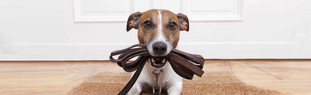 Dog_Tag